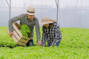 peluang bisnis di bidang pertanian menguntungkan dan akan menjadi trends di tahun 2020