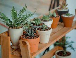 jenis tanaman hias untuk usaha